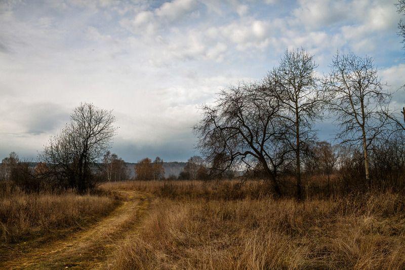 осень, поздняя осень, пасмурный день * * *photo preview