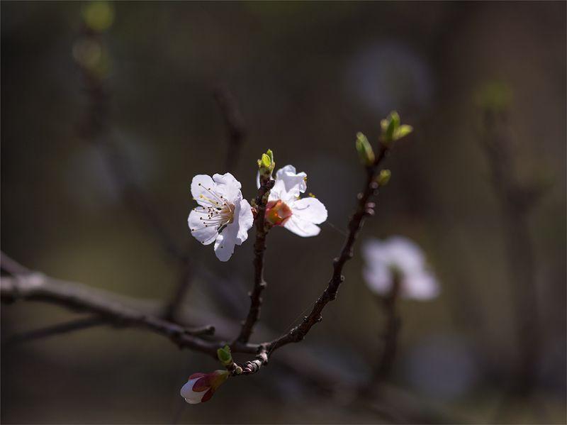 nature, природа, весна, ветка, цветы, весенние картинкиphoto preview