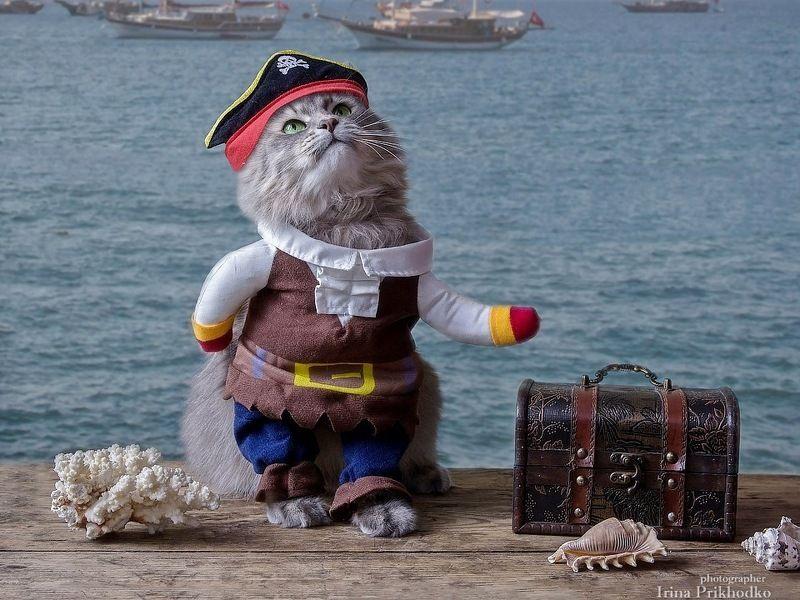 домашние животные, марионетка, костюм пирата, постановочное фото, кошка Масяня, морской пейзаж Хвастливый пиратphoto preview