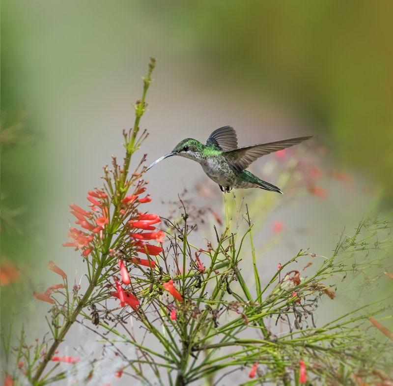 Hummingbirdphoto preview