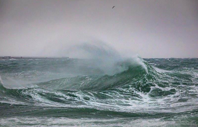 море,крым,пейзаж,шторм,россия,фототур,волна,волны,природа,севастополь Шторм на Черном мореphoto preview