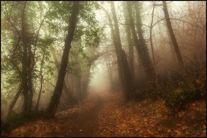 italy,monte venda,colli euganei,тропинка,италия,эвганские холмы,монте венда,туман. Тропинка в туман... фото превью
