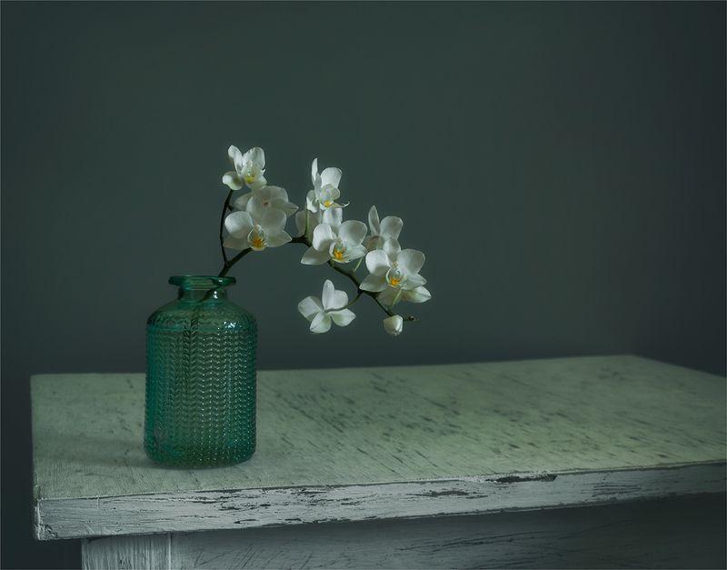 still life, натюрморт, природа, цветы, орхидея, ветка, минимализм, цвести, натюрморт с веточкой орхидеиphoto preview