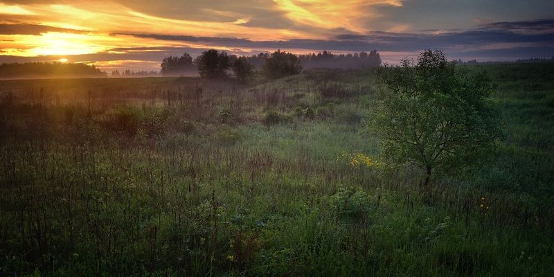 лес, природа, пейзаж, лето, подмосковье Летомphoto preview