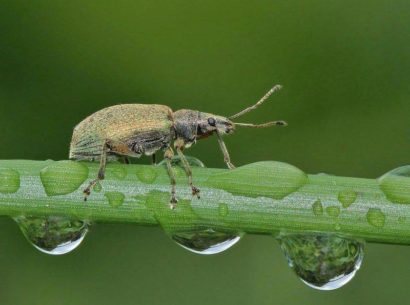 природа , насекомые , жук , капли , макро после дождяphoto preview