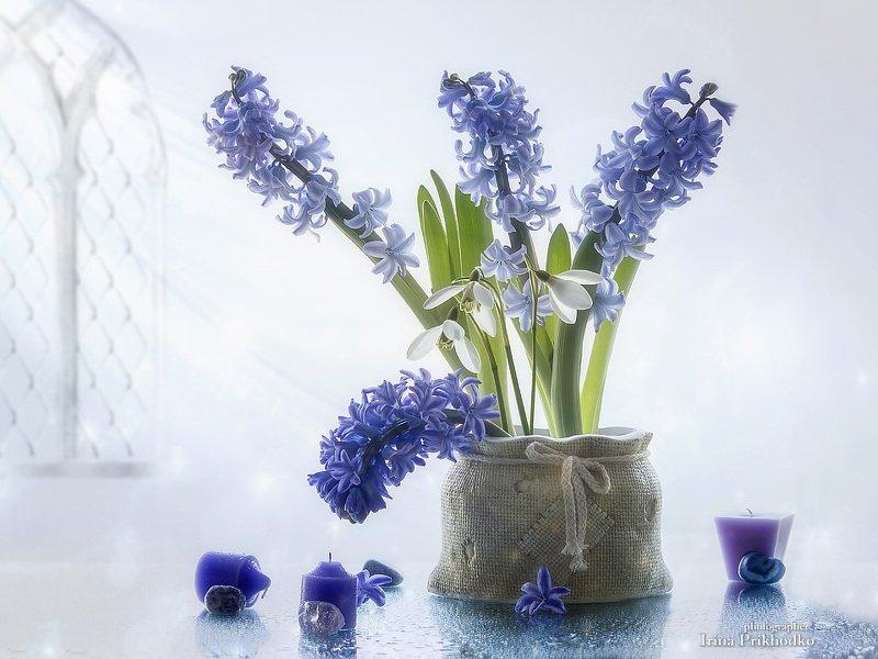 натюрморт, цветы, гиацинты, первоцветы, цветочный натюрморт Весенняя прохладаphoto preview