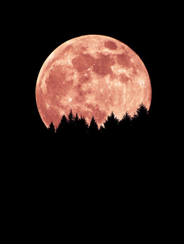 Лунное дефиле.photo preview