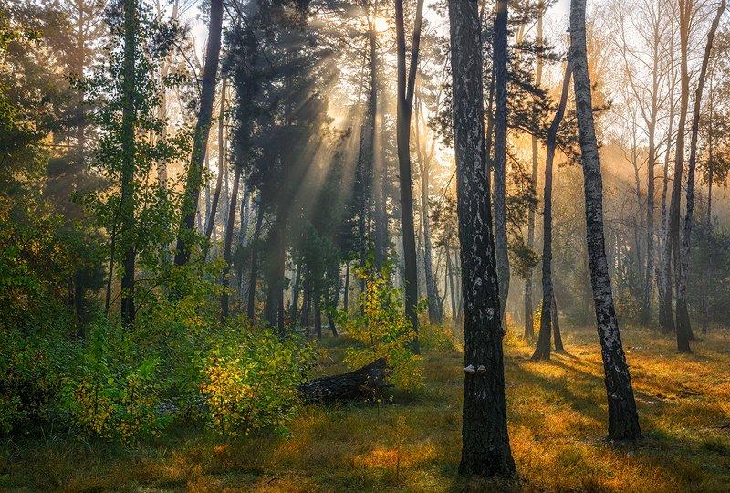 landscape, пейзаж, утро, лес,  деревья, солнечный свет,  солнце, природа, солнечные лучи,  прогулка, утро в лесуphoto preview