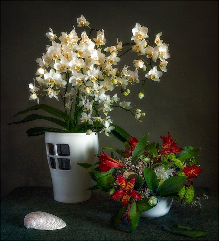 still life, натюрморт,    винтаж,  цветы, природа, букет, орхидея, ракушка, натюрморт с цветамиphoto preview