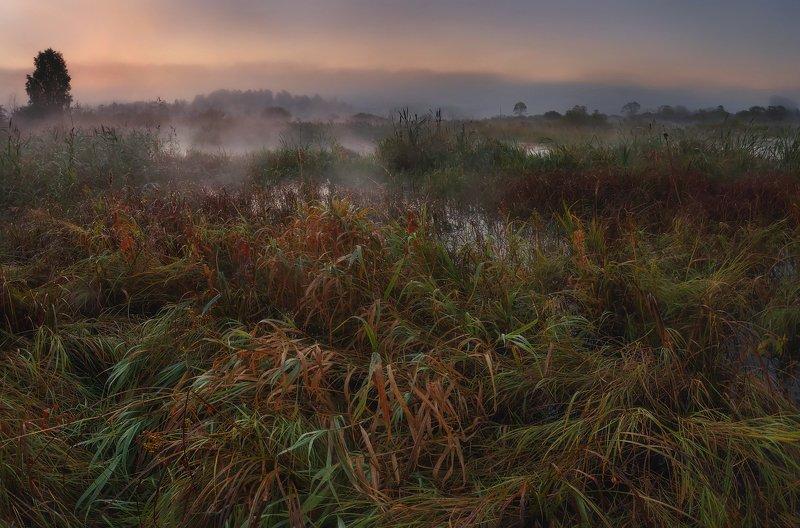 осень, рассвет, пейзаж, ленобласть, природа, туман Осень на болотах...photo preview
