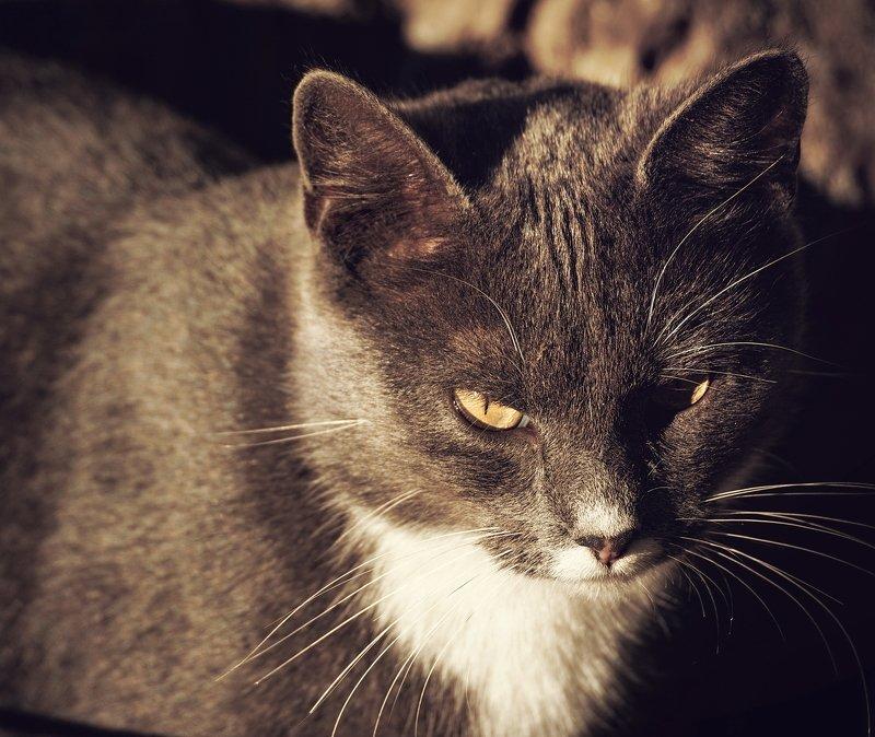 животное, животные, кот, коты, кошка, кошки yellow-eyedphoto preview