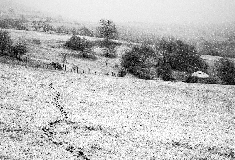 снег,весна,снег на перво цвет. Снег весной..photo preview