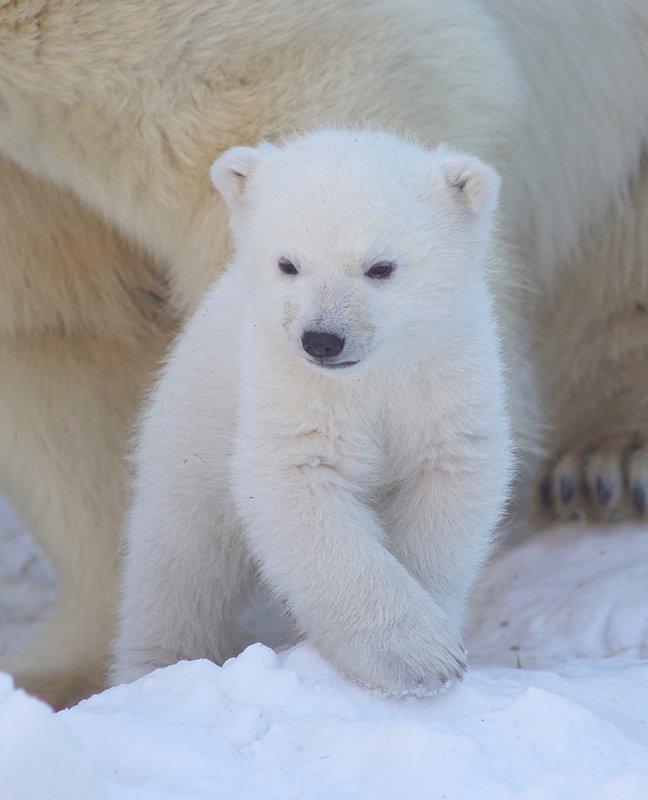 медвежонокphoto preview
