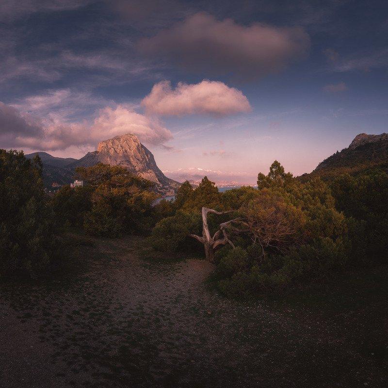 Гора Сокол, можжевеловая роща, Новый свет.photo preview