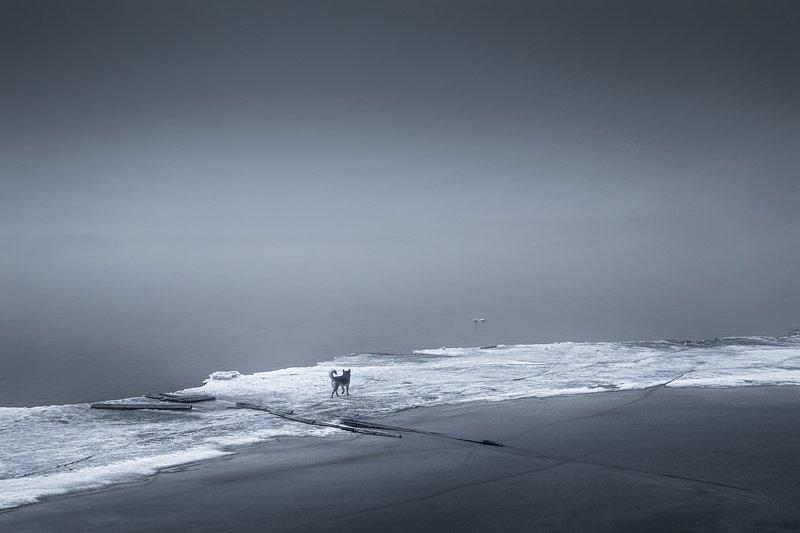 весна туман ледоход река вода льдина собака На льдинеphoto preview