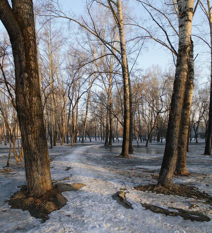 март, утро, парк, весна Мартовское утроphoto preview