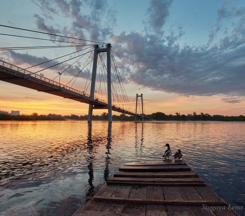 рассвет, мост Утки встречают рассветphoto preview