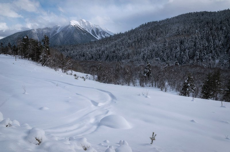 mountains, forest, nature,  горы, пейзаж, лес, кавказ, архыз, twilight, fir, Архыз.photo preview