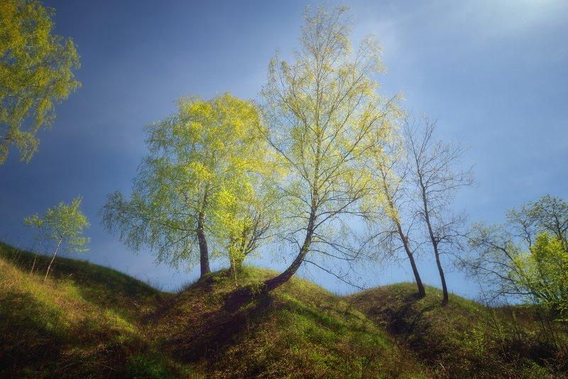 Молодая зеленьphoto preview