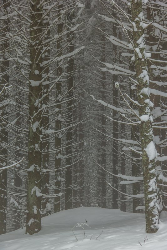 landscape winter mountains snow fog photography photo canvas wallpaper nature trees frame view  Winter in the Vladeasa Mountains.photo preview