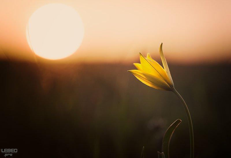 Зов весныphoto preview
