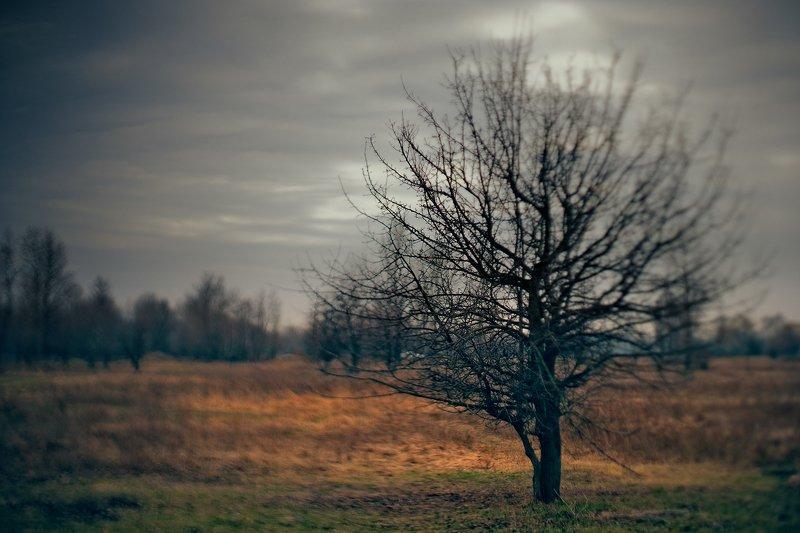 весна, пейзаж, настроение, тилт-шифт, сезон, непогода, пасмурно, weather, spring, season, mood, sad, overcoast Киевская Веснаphoto preview
