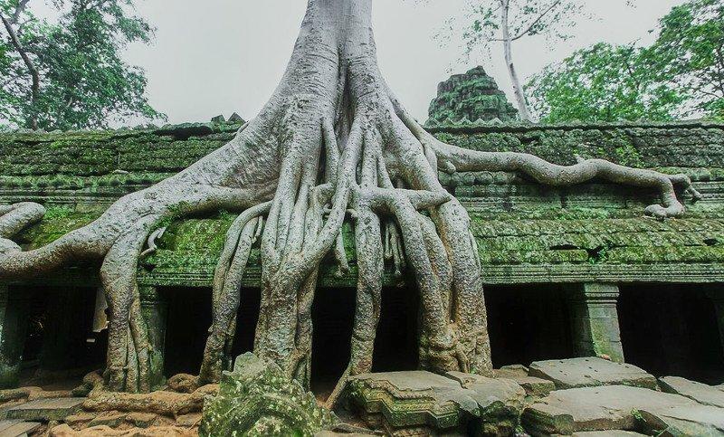 Храмы поглощенные джунглями…Камбоджийский храмовый Ангкор-Ват — крупнейшее из когда-либо созданных культовых сооружений, история которого насчитывает почти 9 столетий!photo preview