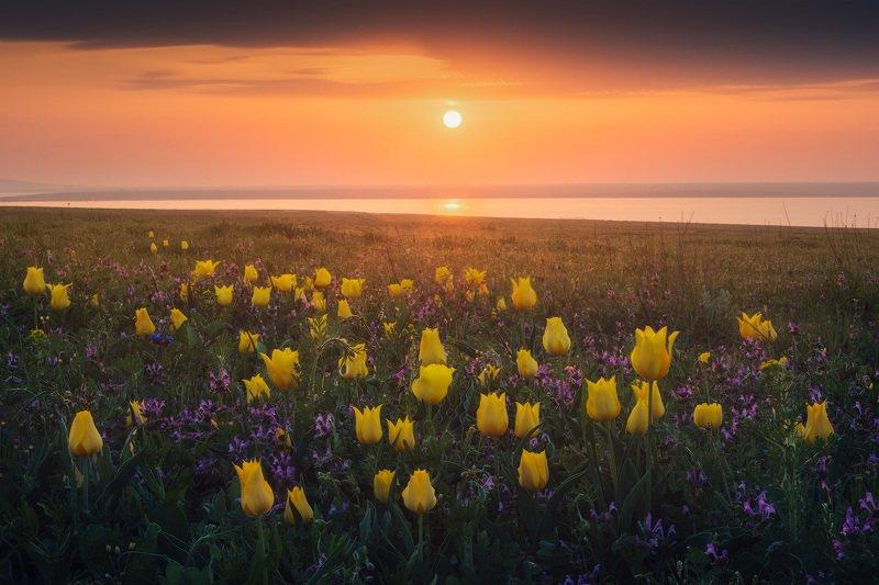 крым, весна в крыму, тюльпаны, керченский полуостров, дикие тюльпаны, опук, опукский заповедник, розовое озеро, озера крыма, фототур, фототур в крым, туры по крыму, путешествия, туризм, кояшское озеро Ваш шанс увидеть тюльпаны!photo preview