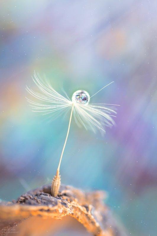 макро, пушинка, капля, радуга, macro, feather, drop, rainbow, fuzz ***photo preview