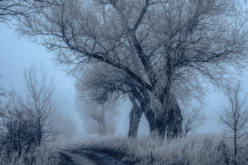 witer, dawn, tree, nature, sky, landscape, fog, ground frost, nikon, mist, dirt road,  Winterphoto preview