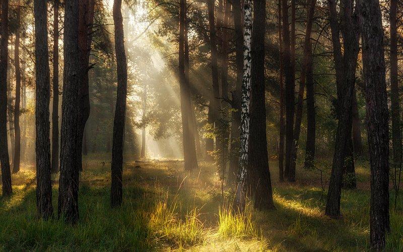 landscape, пейзаж, утро, лес,  деревья, солнечный свет,  солнце, природа, солнечные лучи,  прогулка, по солнечной дорожкеphoto preview