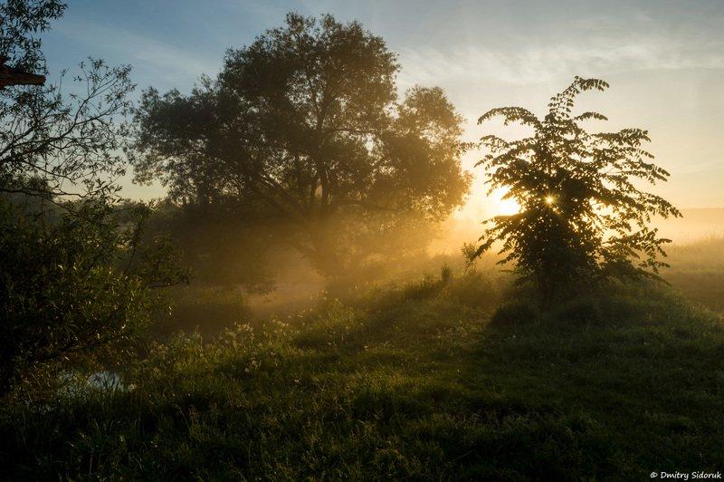 Утренний светphoto preview