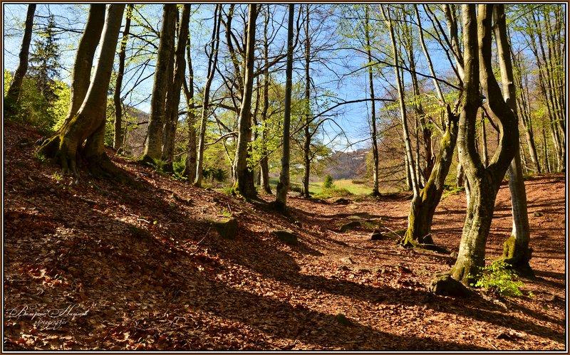 карпаты, весна, боржава, первая зелень, лес, листва Весна. Первые листочкиphoto preview