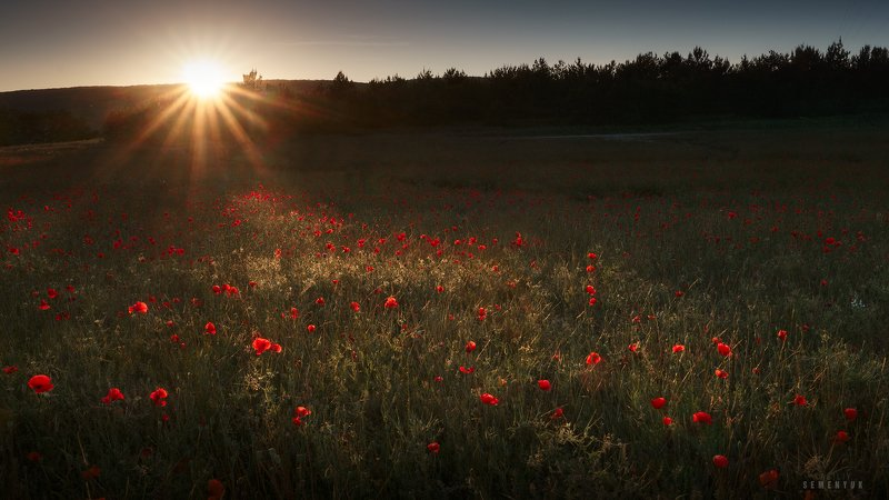 крым, бахчисарай, лето, рассвет, маки, поле, цветы, солнце, poppies, crimea, summer, fields, flowers. Маково-рассветная.photo preview