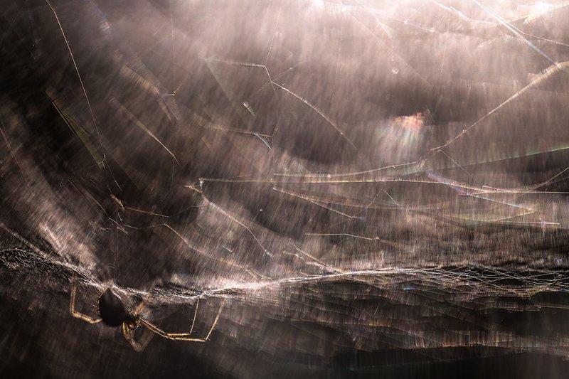 паук, макро, сети, ожидание, мастер, свет, воронеж, геннадий мещеряков Мастер электричества...photo preview