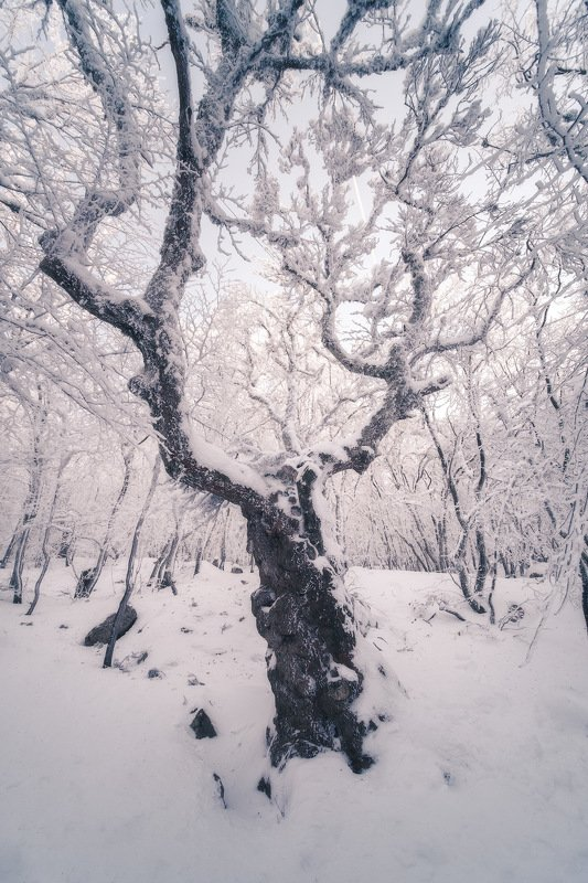 россия, крым, полуостров, пейзаж, природа, черное море, зима, снег, лес, заход солнца, закат, сугроб, ай-петри Крымское чудище лесноеphoto preview