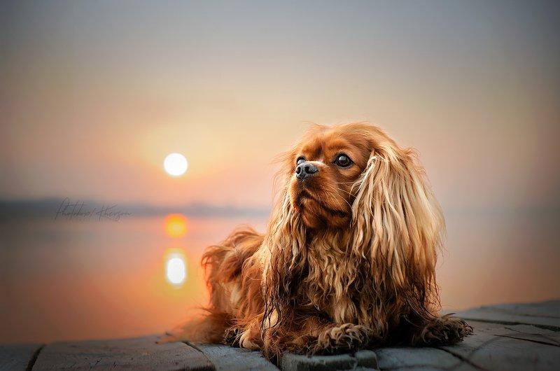 собака, анималистика, весна, рассвет Джонphoto preview