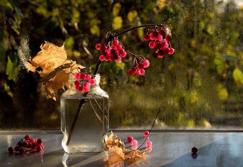 натюрморт, ягоды, калина, осень, жёлтые листья, окно Ветка калиныphoto preview