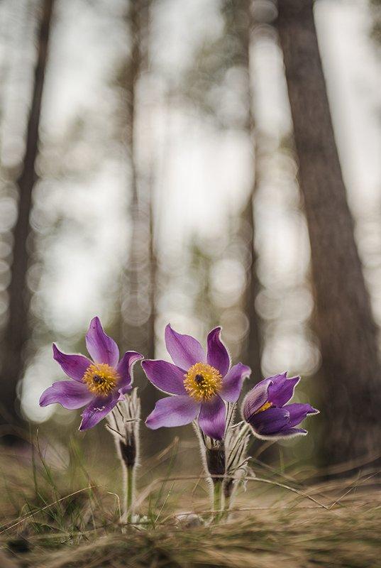 сон трава, свет, цвет, весна, апрель, маклок, воронеж, геннадий мещеряков Открытые сны...photo preview