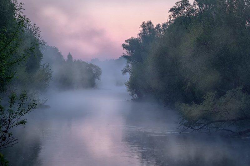 осетр, река, утро, рассвет, туман, вода, отражения, деревья, призраки Что-то тамphoto preview