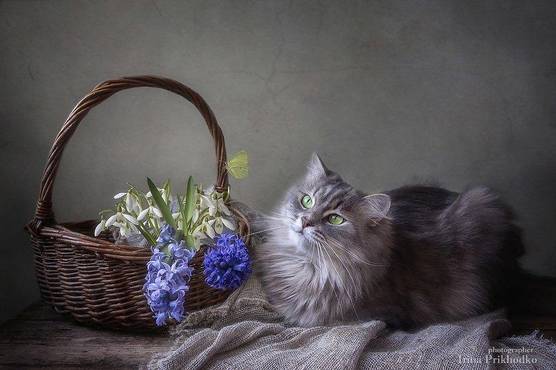 натюрморт, весна, кошка Масяня, весенний букет, бабочка Наблюдательницаphoto preview