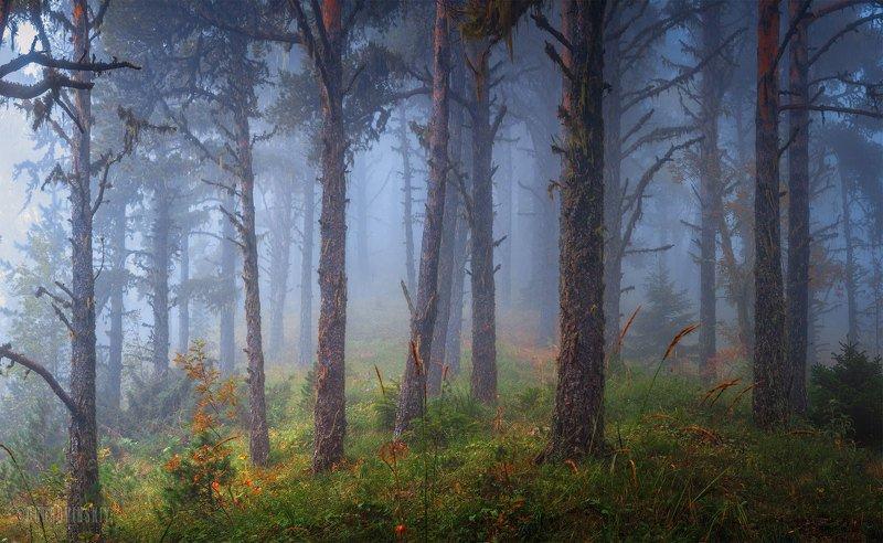 адыгея, лес, туман, деревья Про туман фото превью
