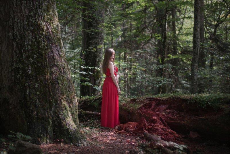 В лесах Домбаяphoto preview