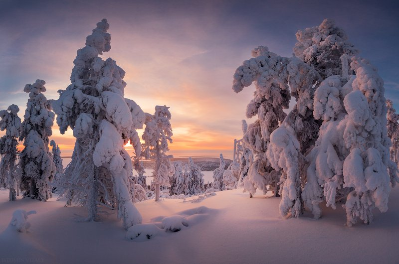 пейзаж,снег,зима,кольский ,закат,деревья Зимний лесphoto preview