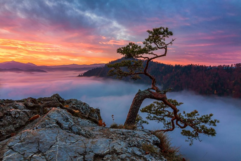sokolica,pieniny,national park,sunrise,mist,fog,mountains,landscape Sokolica at sunrisephoto preview