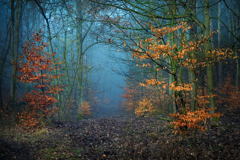 magical forest abyss fall autumn dranikowski trees path mist foggy morning Magical forestphoto preview
