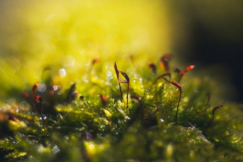 макро, весна, гелиос,  ***photo preview