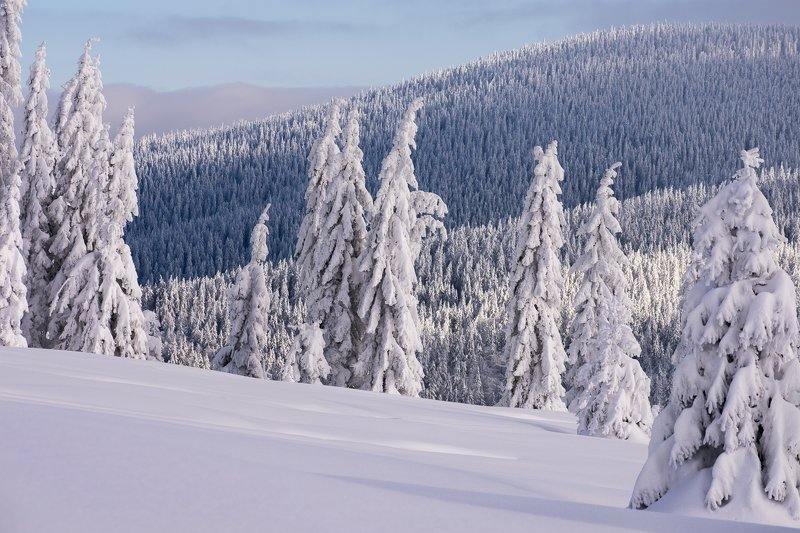 winter,snow,trees,forest,cold,mountains Frozen treesphoto preview
