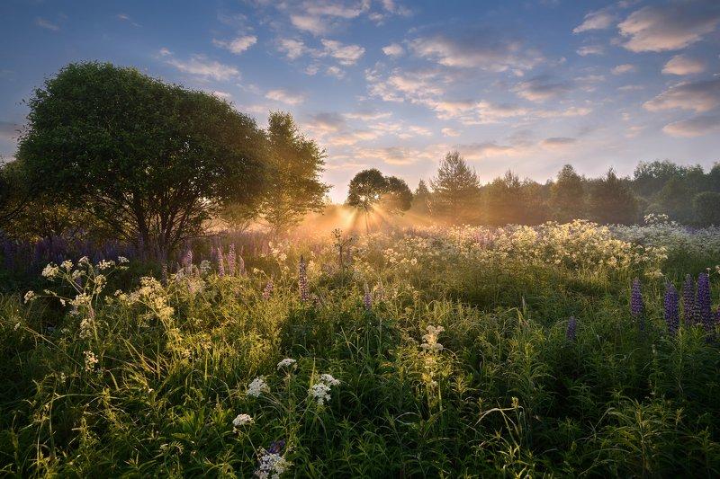 лето, утро, рассвет, солнце, небо, облака,туман,цветы летний рассветphoto preview