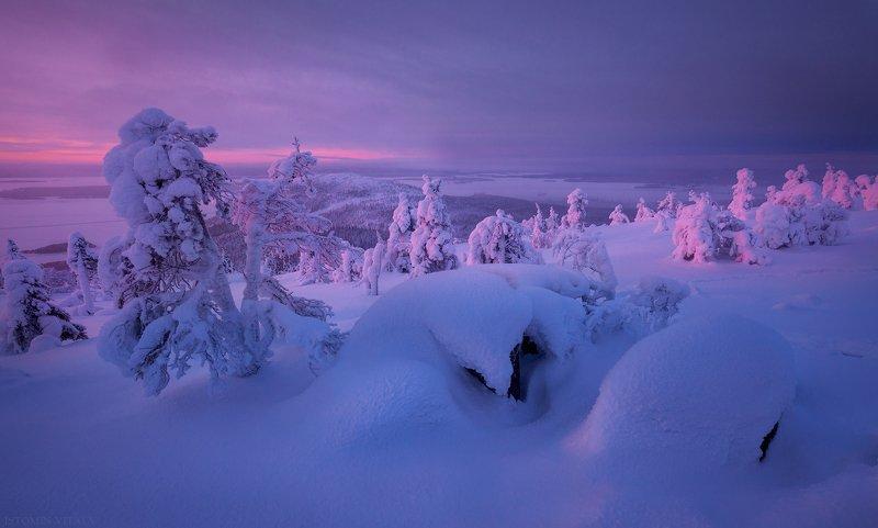 пейзаж,кандалакша,зима,рассвет,россия,кольский,север,горы,снег На сопках Кандалакшиphoto preview